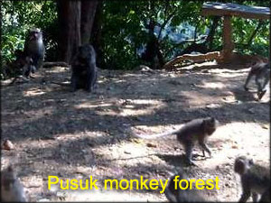 Pusuk-monkey-forest